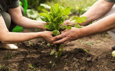 Plan cooperativo para salir de la emergencia alimentaria